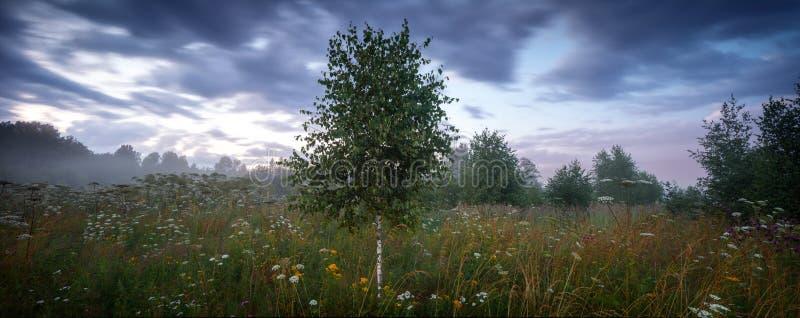 Grande prato extra e foresta di estate di panorama prima di una tempesta fotografie stock