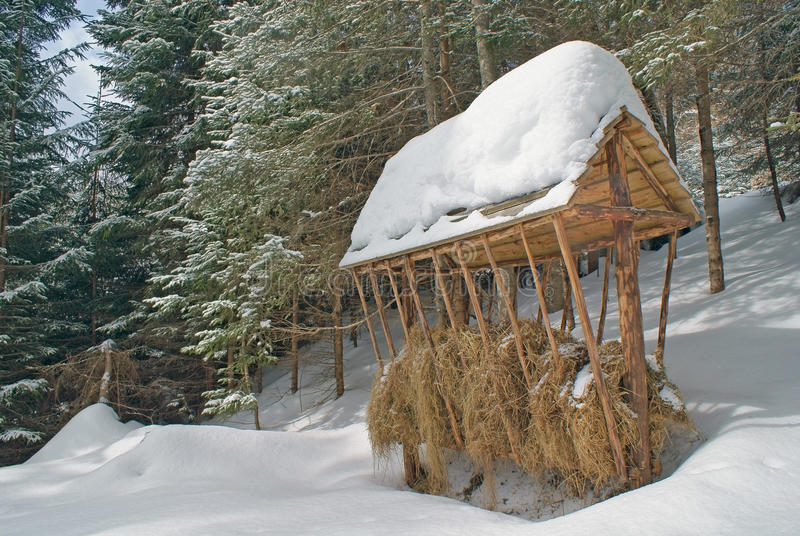 Grande primo piano di legno dell'alimentatore con fieno nell'inverno fotografia stock libera da diritti