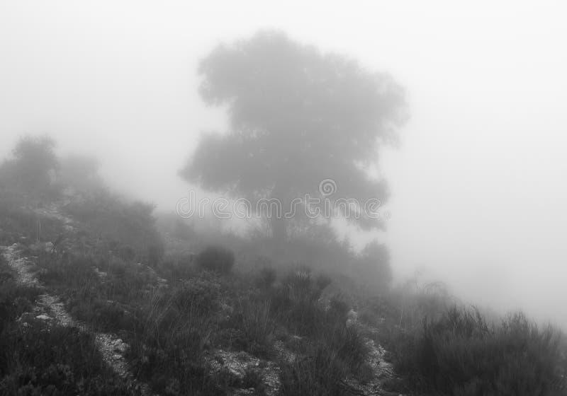 Grande quercia fotografata in nebbia immagine stock libera da diritti