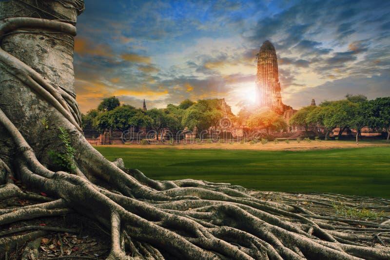 Grande racine de scape de terre de banian de pagoda antique et vieille dedans photographie stock libre de droits