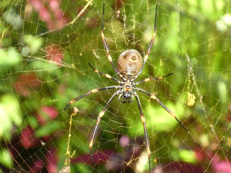 Grande ragno sulla fine di web sulla macro fotografie stock