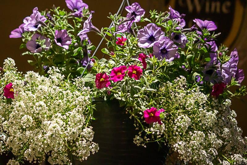 Grande ramalhete em pasta com rosa branco e as flores roxas foto de stock royalty free