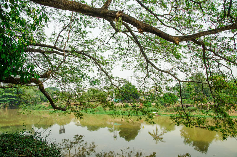 Grande ramo di albero sopra il fiume fotografia stock libera da diritti