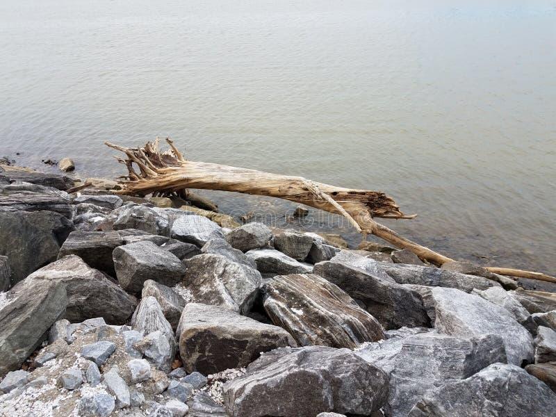 Grande ramo ou árvore de madeira em rochas com rio imagem de stock