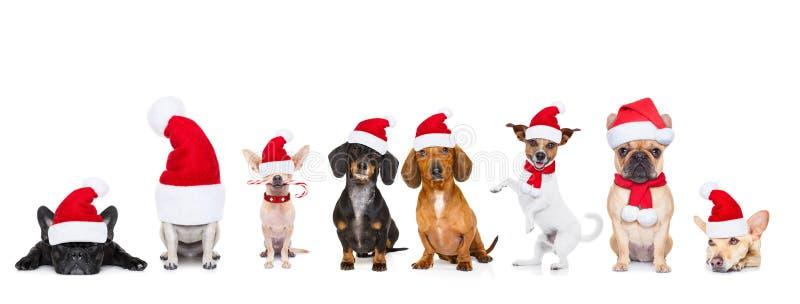 Grande rangée d'équipe des chiens des vacances de Noël photographie stock