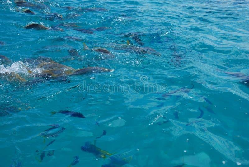 Grande recife foto de stock