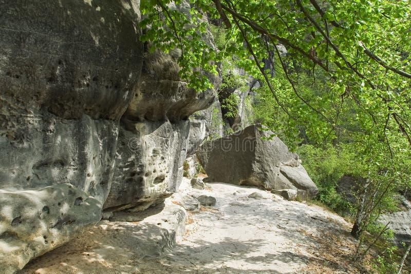 Grande roccia nell'ombra dell'albero immagine stock libera da diritti