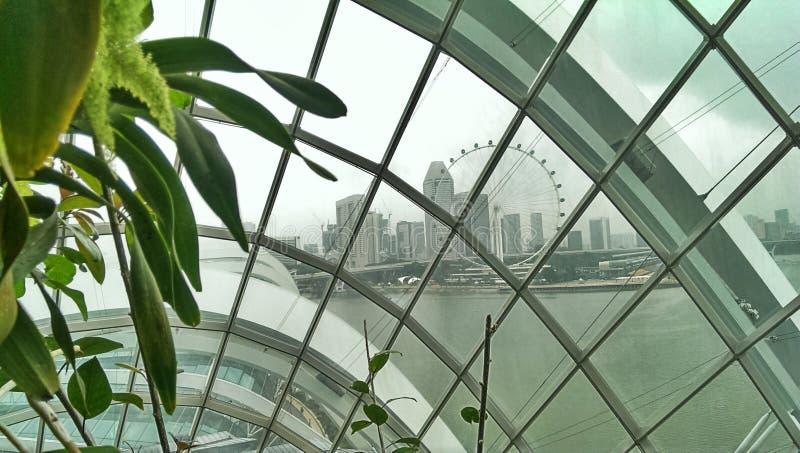 Grande roue d'insecte de Singapour  photos libres de droits