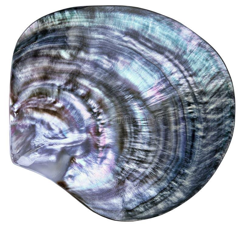 Grande seashell variopinto immagini stock