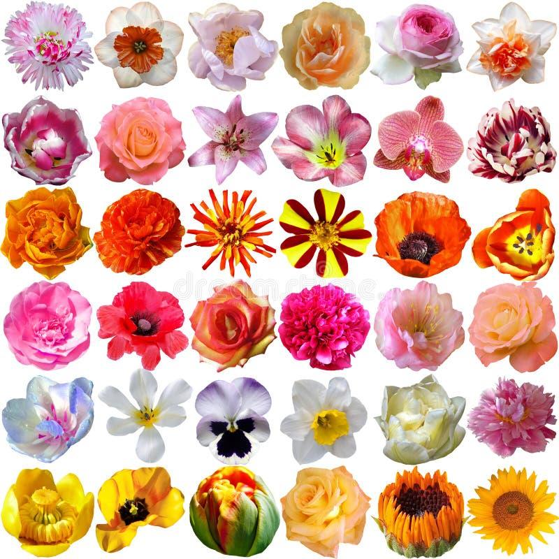 Grande selezione di vari fiori illustrazione di stock