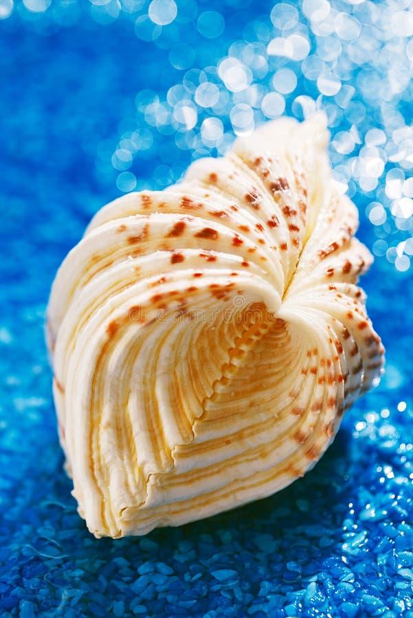 grande shell branco do mar da estrela do mar no seixo azul com água imagens de stock royalty free