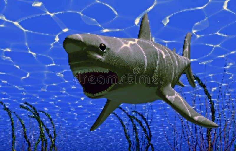 Grande squalo illustrazione vettoriale