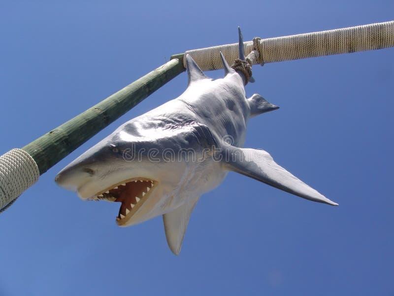 Download Grande squalo bianco immagine stock. Immagine di minaccia - 209375