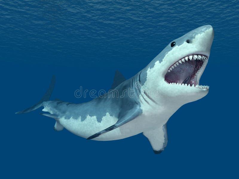 Grande squalo bianco illustrazione di stock
