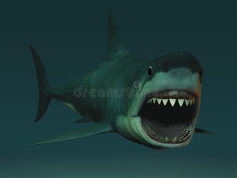 Grande squalo bianco pronto a mordere. illustrazione vettoriale