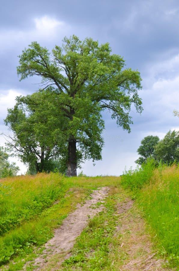 Grande strada del villaggio dell'albero al cielo fotografie stock