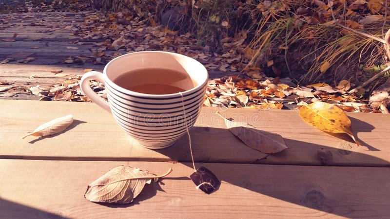 Grande tazza da the con tè verde organico su superficie di legno naturale un la mattina fresca e accogliente di caduta fuori in s fotografia stock
