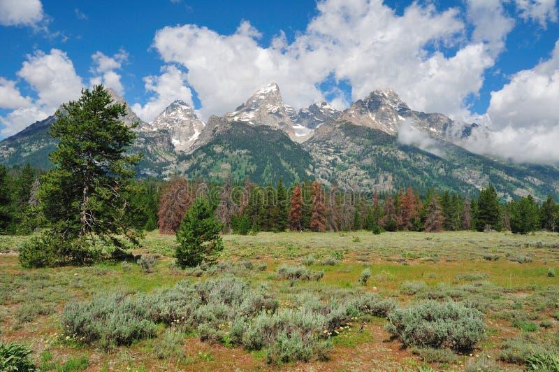 Grande Tetons immagini stock libere da diritti