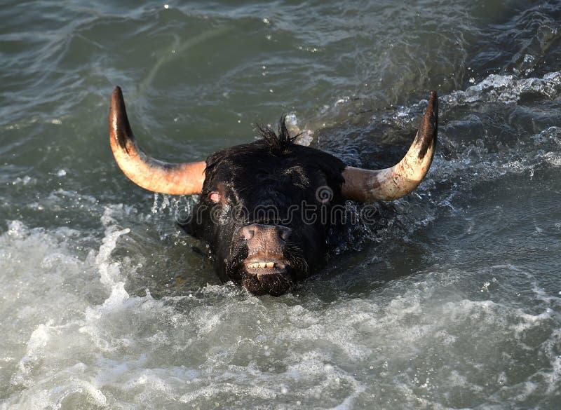 Grande toro nel mare spagnolo immagine stock libera da diritti