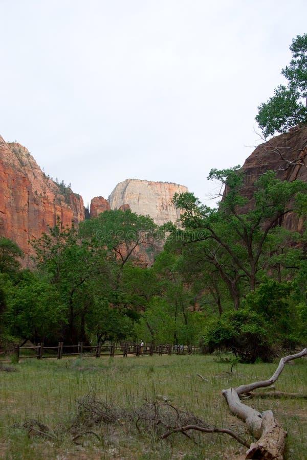 Grande trono branco, Zion National Park, Utá imagem de stock royalty free