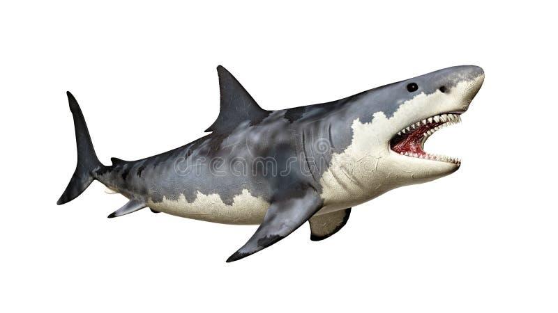 Grande tubarão branco ilustração stock