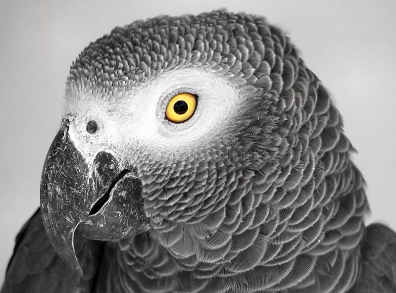 Grande uccello fotografie stock libere da diritti