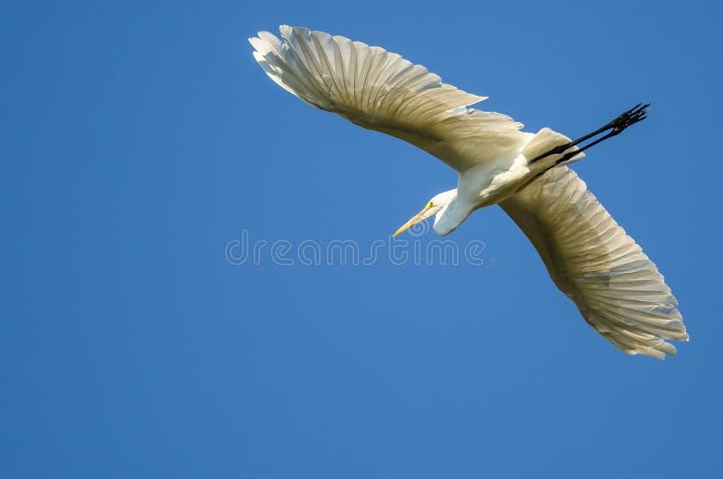 Grande vôo do Egret em um céu azul imagens de stock