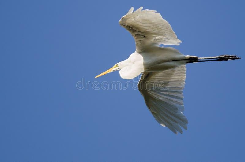 Grande vôo do Egret em um céu azul fotografia de stock royalty free
