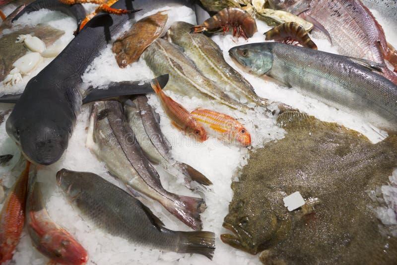 Grande variedade de peixes no indicador do gelo do mercado imagens de stock