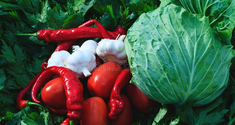 Grande variedade de produtos hortícolas preparados para picles Amortecimento de couve, tomate vermelho, pimentos quentes, alho e  imagem de stock royalty free