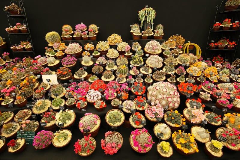 Grande varietà di cactus di fioritura fotografia stock libera da diritti