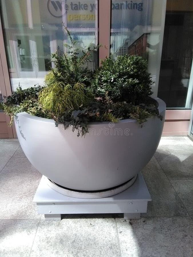 Grande vaso di pietra con i piccoli arbusti sulla piattaforma di legno immagine stock libera da diritti