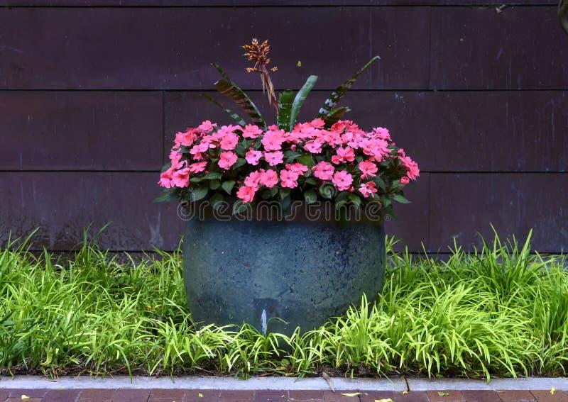 Grande vaso in pieno dei fiori rosa adorabili di impatiens della Nuova Guinea a Dallas Arboretum fotografie stock libere da diritti