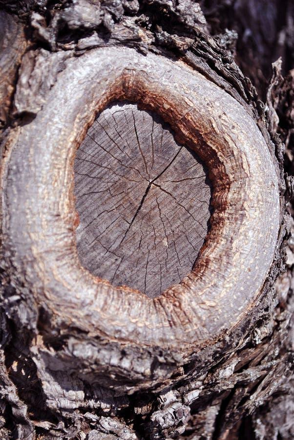 Grande vecchia fine di struttura del ceppo di albero su con la fine segata del ramo sul dettaglio, struttura organica naturale fotografie stock libere da diritti