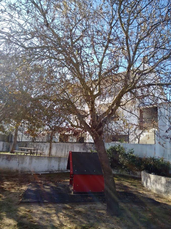 Grande vecchio albero nel campo da giuoco fotografie stock