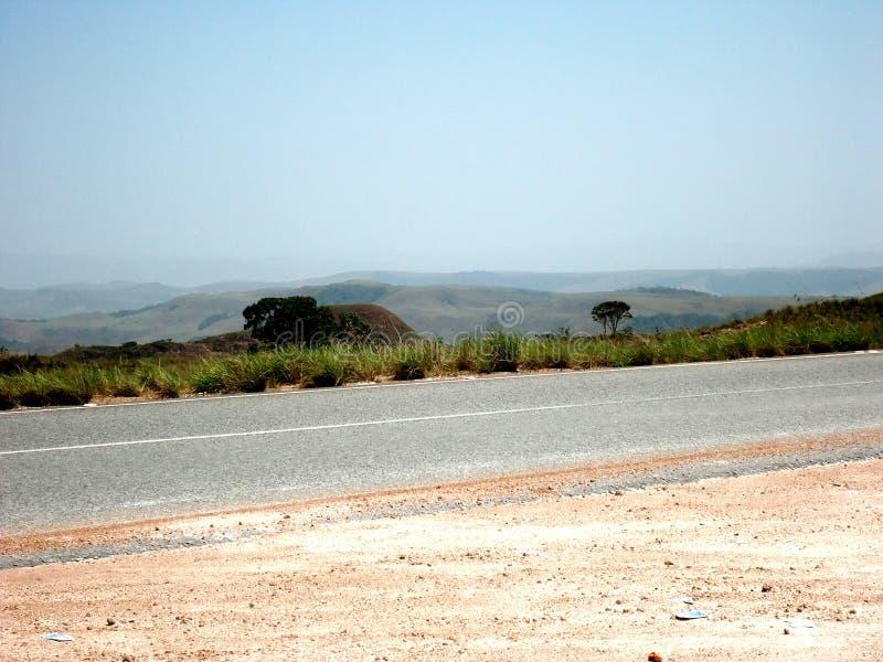 grande verde da Venezuela de amazon do savana imagens de stock royalty free