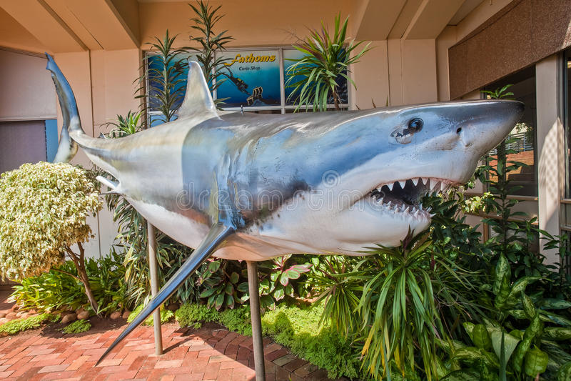 Grande vetroresina dello squalo bianco   immagini stock libere da diritti