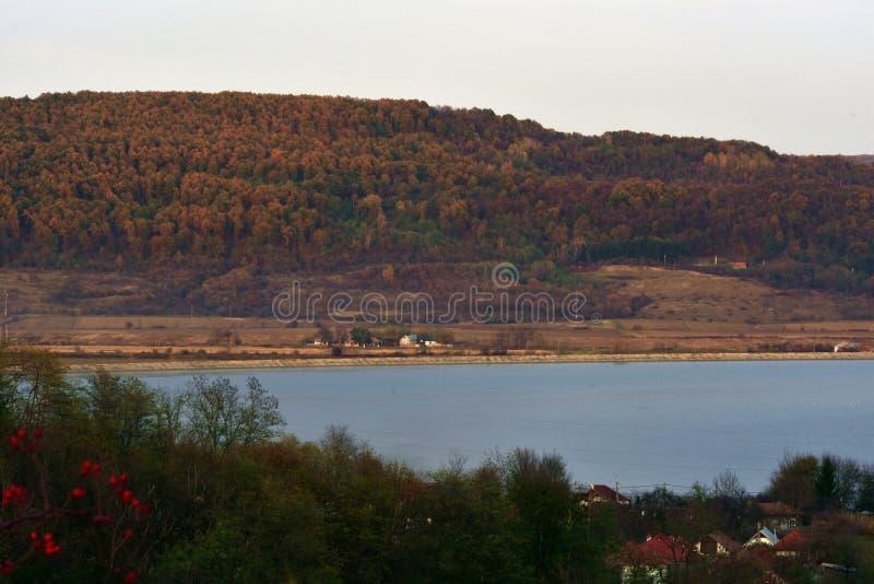 Grande vista com uma floresta alta perto do lago fotos de stock royalty free