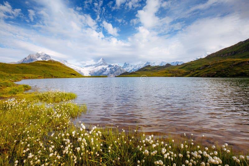 Grande vista de Mt Schreckhorn e Wetterhorn acima do la de Bachalpsee fotografia de stock royalty free