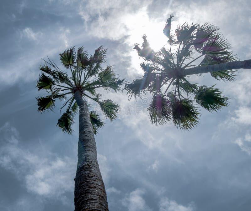 Grande vista del cielo con due palme fotografia stock libera da diritti
