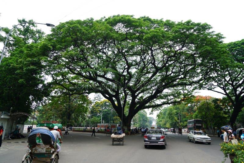 Grande vista della via dell'albero, Dacca, Bangladesh fotografia stock
