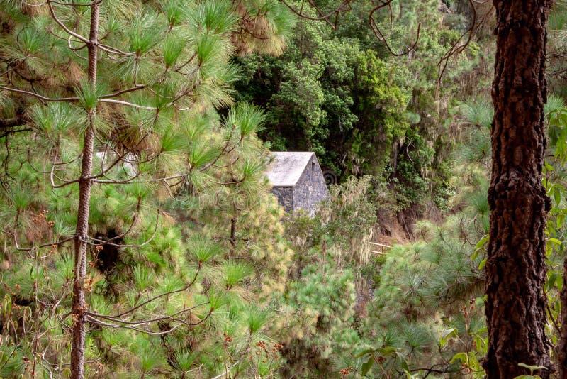 Grande vue dans une forêt avec une maison photographie stock libre de droits