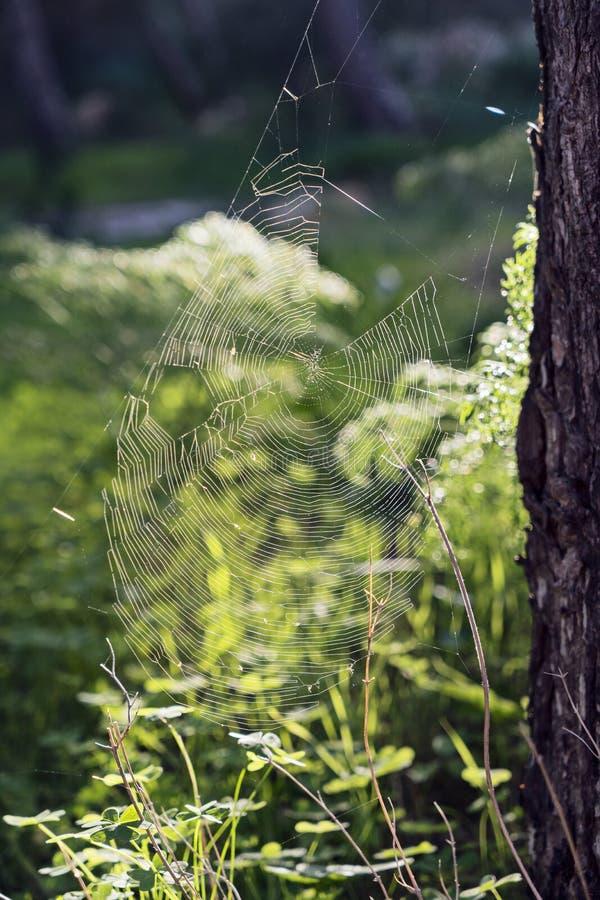 Grande Web de aranha entre na grama imagem de stock royalty free