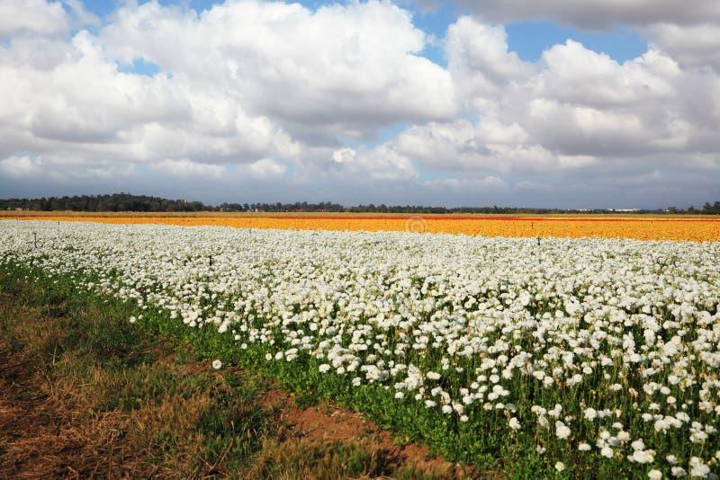 Grande zone des fleurs photos libres de droits