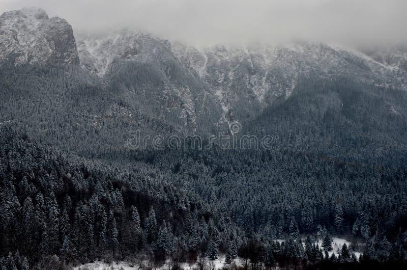 Grandeaur av naturen fotografering för bildbyråer