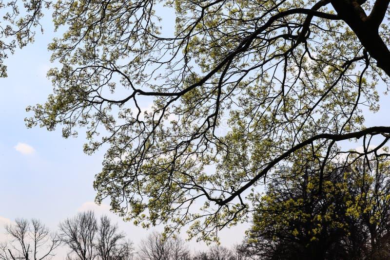 Grandes branches d'arbre en ciel de bâche de parc le jour ensoleillé photos stock