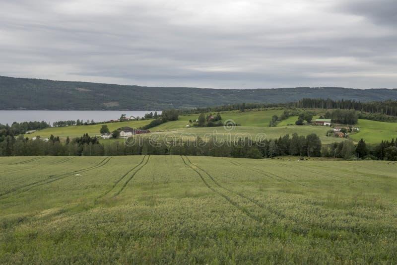 Grandes campos cultivados, cerca de Honefoss, Noruega fotografía de archivo