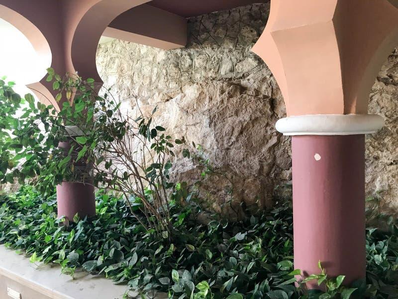 Grandes colonnes des plantes tropicales découpées et vertes fortes rondes contre le contexte d'un mur en pierre dans une station  photographie stock libre de droits