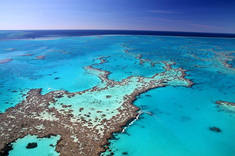 Grandes cores do recife de coral foto de stock