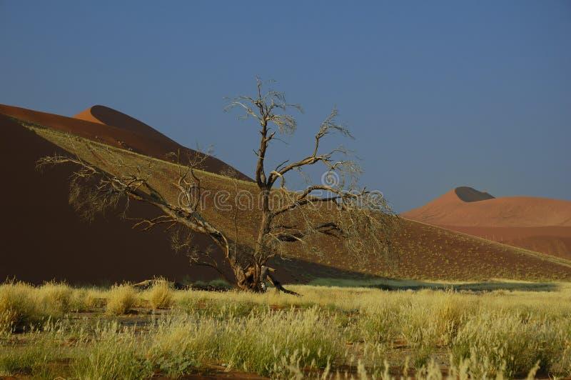 Grandes dunas (deserto de Namib) foto de stock royalty free